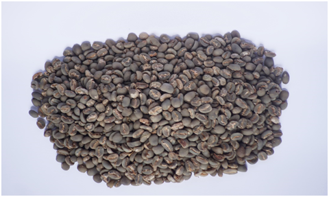 Aceh Gayo Coffee Beans